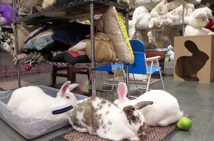 Weird LA Museums - The Bunny Museum